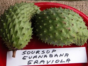 Buy Guanabana fruit