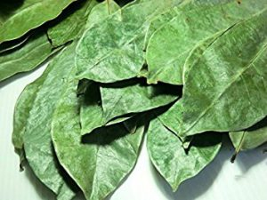 graviola leaves als known as soursop leaves